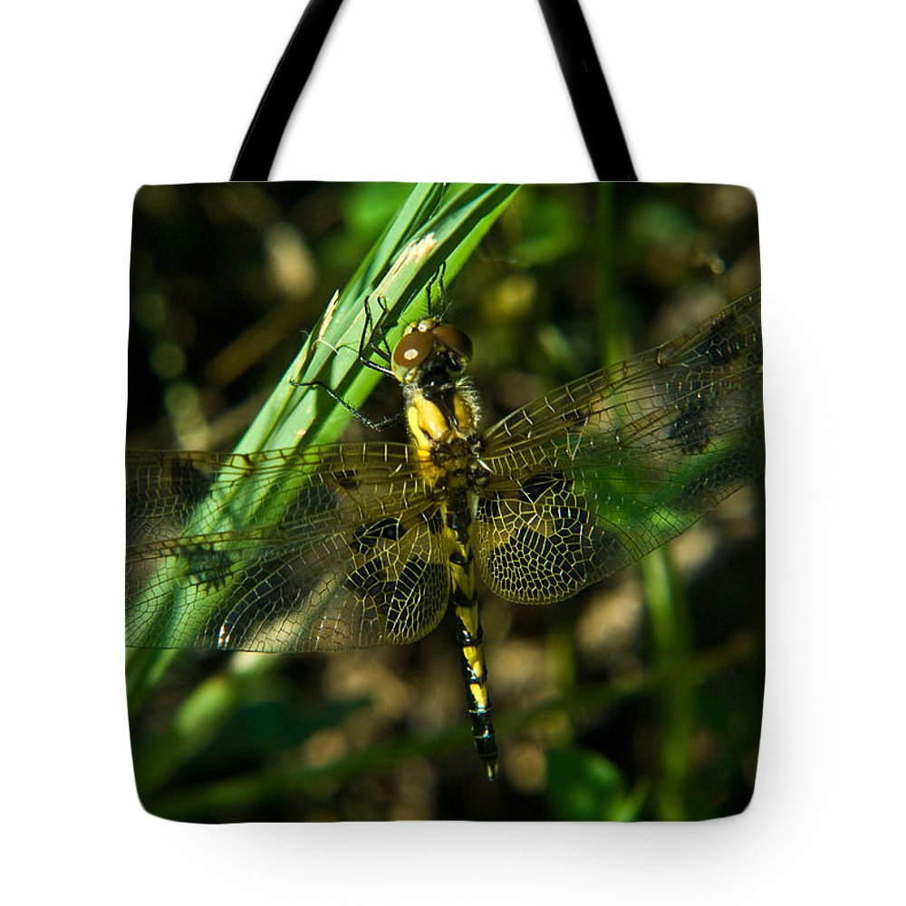 Dragonfly Tote Bag featuring the photograph Dragonfly Venation Revealed by Douglas Barnett