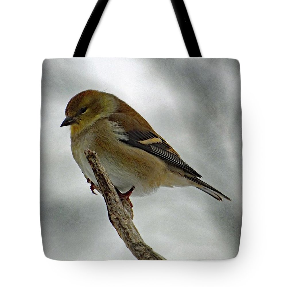 American Goldfinch Tote Bag featuring the photograph Dreaming Of Spring - American Goldfinch by Cindy Treger
