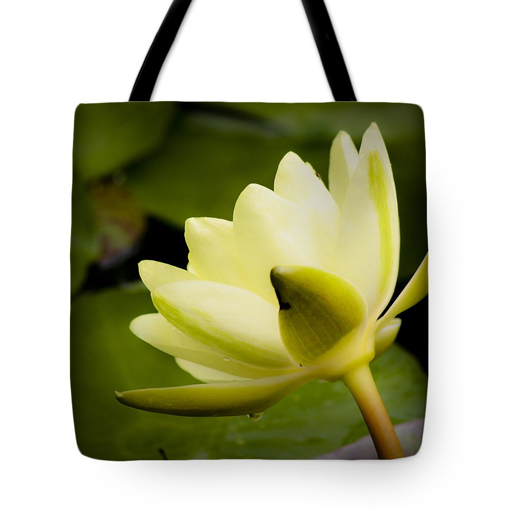 J Paul Getty Tote Bag featuring the photograph Dreamy Water Lilly by Teresa Mucha