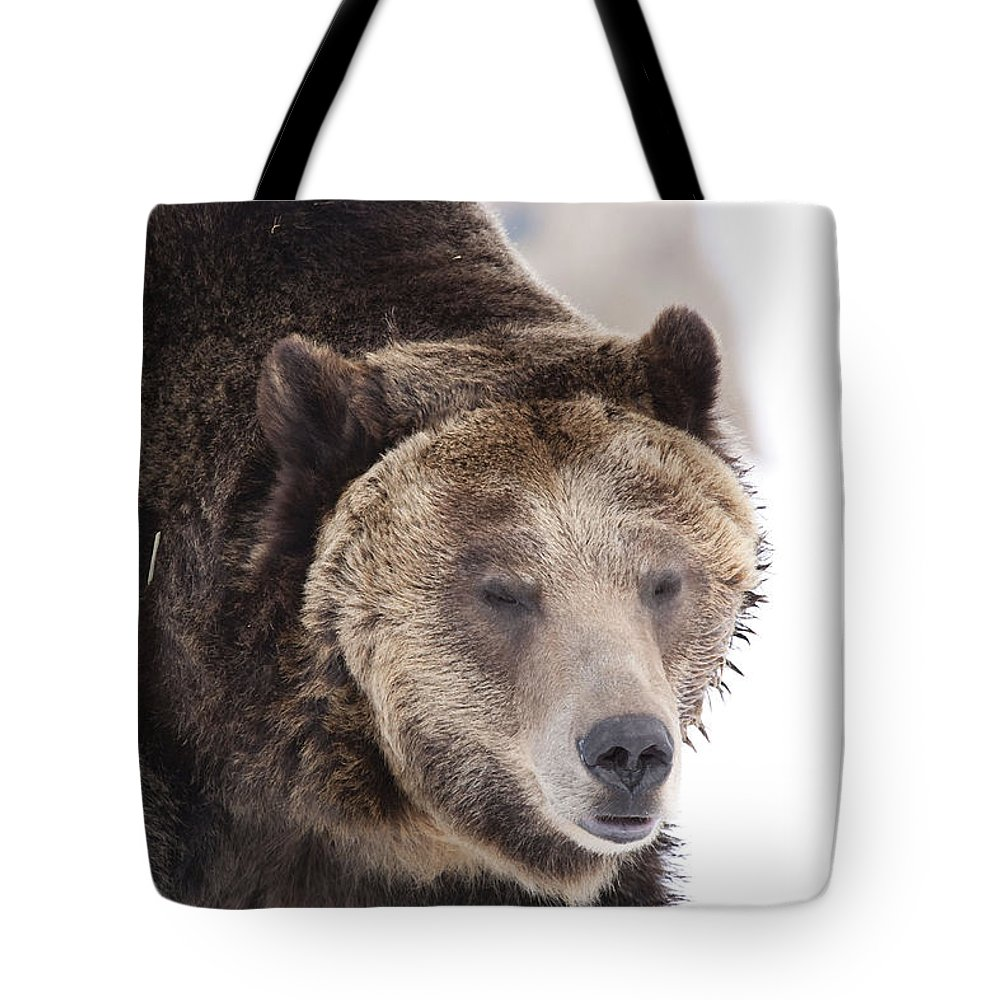 Bear Tote Bag featuring the photograph Drowsy Bear by Mary Haber