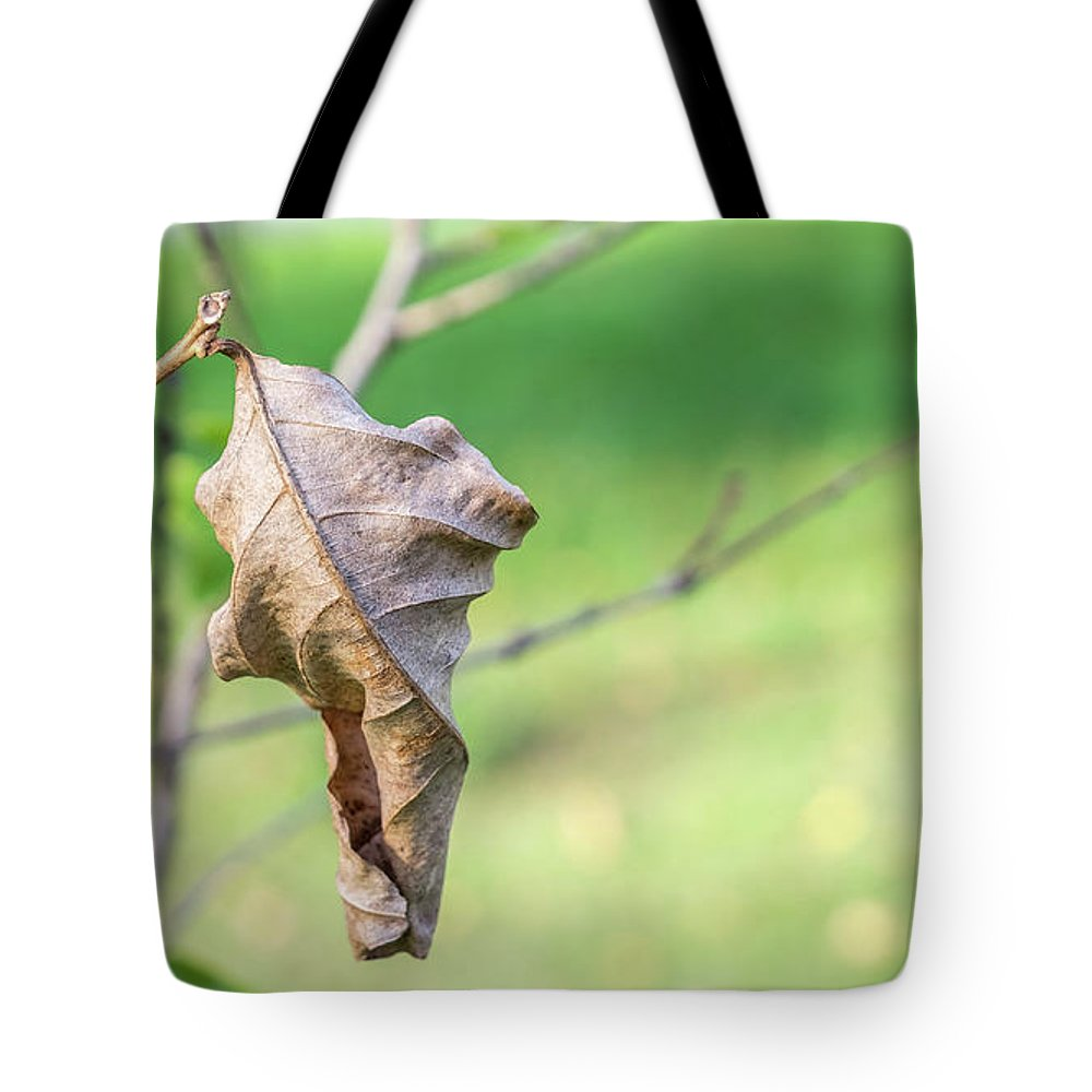 Branch Tote Bag featuring the photograph Dry Leaves by Que Siam
