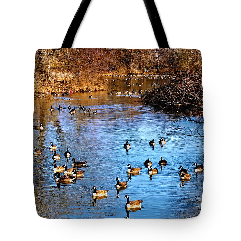 Birds Tote Bag featuring the photograph Duck Duck Goose Goose by Bill Cannon