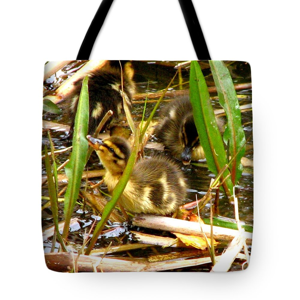 Duck Tote Bag featuring the photograph Ducklings 1 by J M Farris Photography