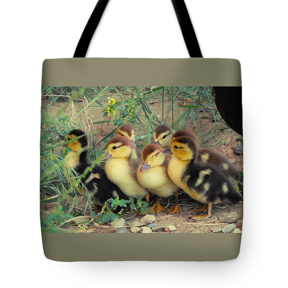 Nature Tote Bag featuring the photograph Ducklings by Kae Cheatham