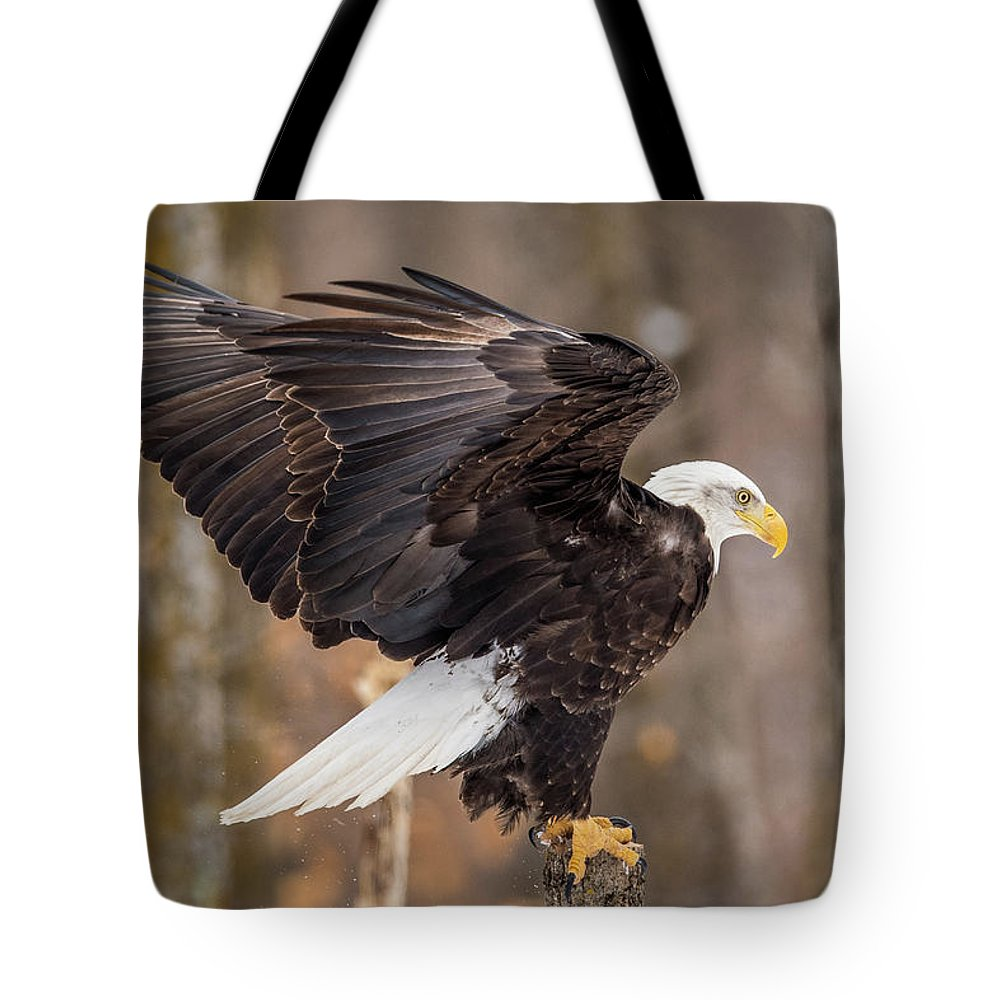 Bald Eagle Tote Bag featuring the photograph Eagle Landing On Perch by Paul Freidlund