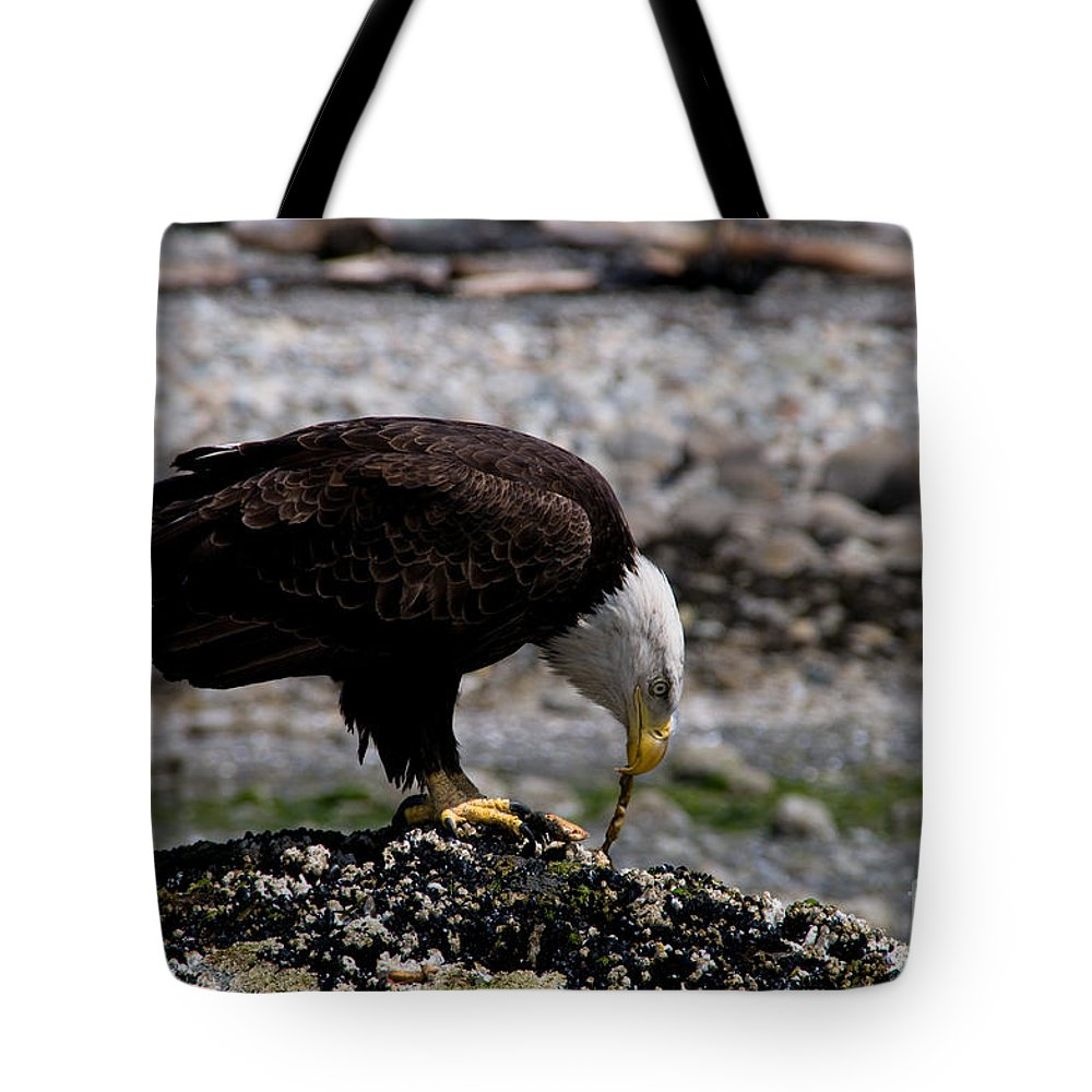 Alertness Tote Bag featuring the photograph Eagle's Prize by Venetta Archer