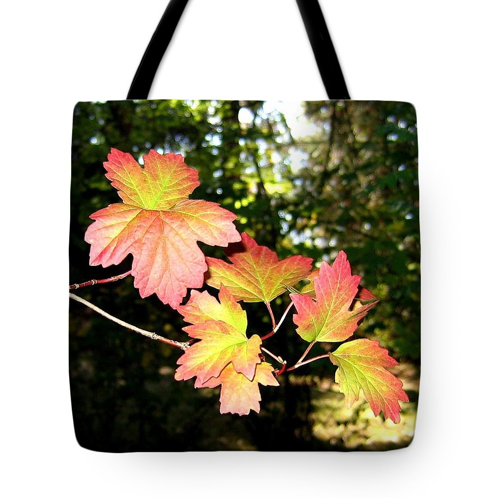 Autumn Tote Bag featuring the photograph Early Days Of Autumn by Will Borden