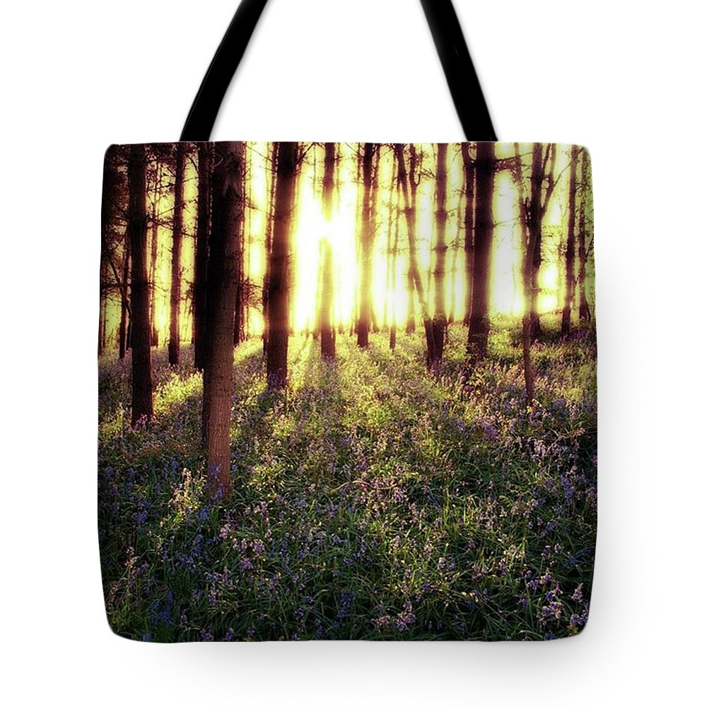 Sunrise Tote Bag featuring the photograph Early Morning Amongst The by John Edwards