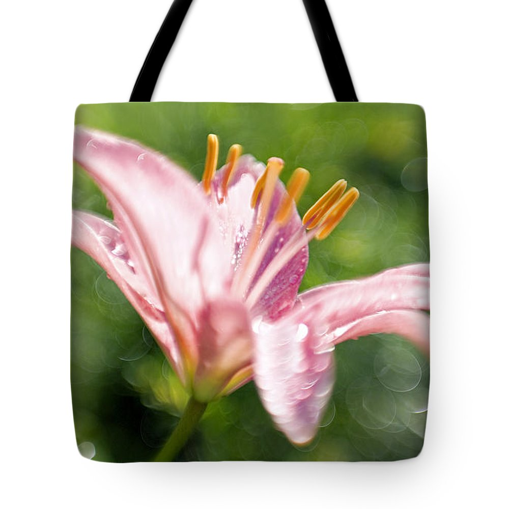 Easter Lily Lilium Lily Flowers Flower Floral Bloom Blossom Blooming Garden Nature Plant Petals Plants Grow Species Garden One Single 1 Petals Close-up Close Up Cultivate Botanical Botany Nature Tote Bag featuring the photograph Easter Lily 1 by Tony Cordoza