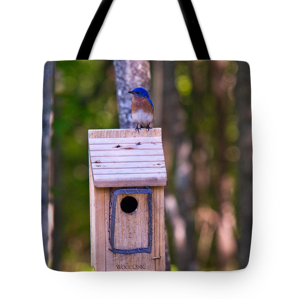 Cumberand Tote Bag featuring the photograph Eastern Bluebird Perched On Birdhouse 4 by Douglas Barnett