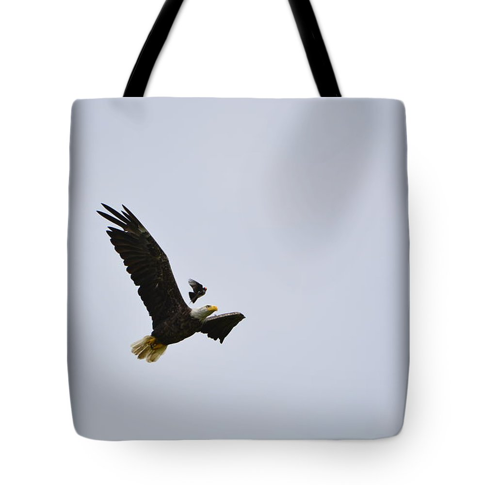 Eastern Kingbird Tote Bag featuring the photograph Eastern Kingbird And Eagle by Mark Madion
