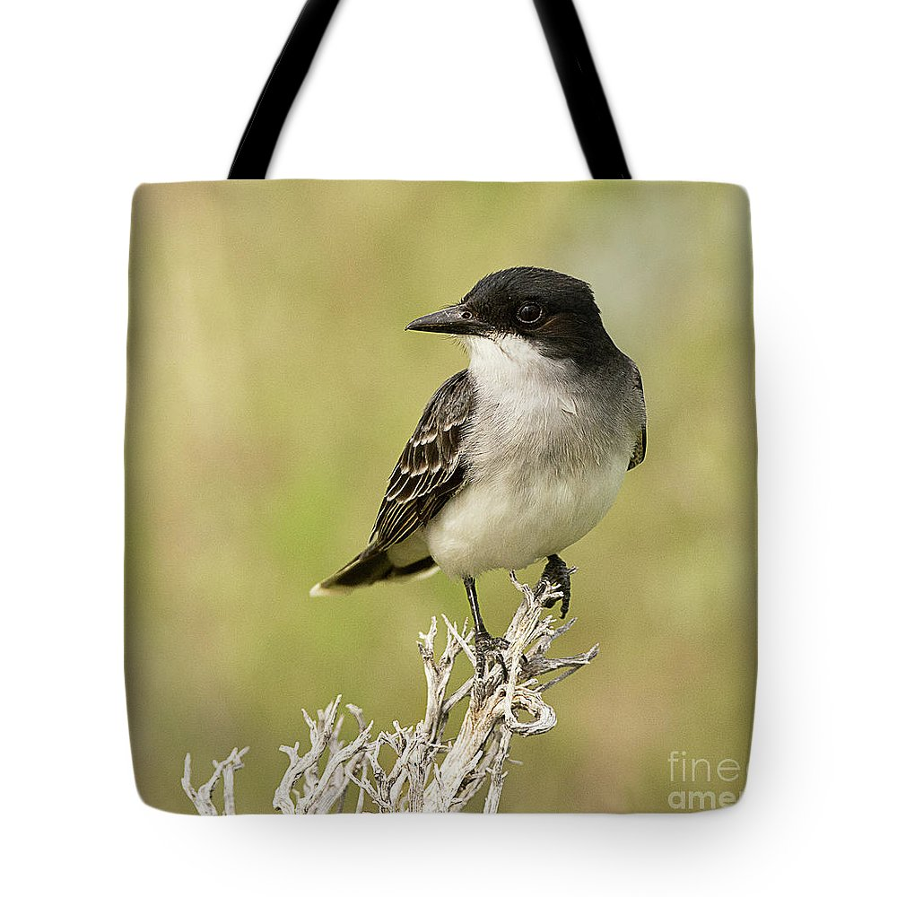 Bird Tote Bag featuring the photograph Eastern Kingbird Up Close by Dennis Hammer