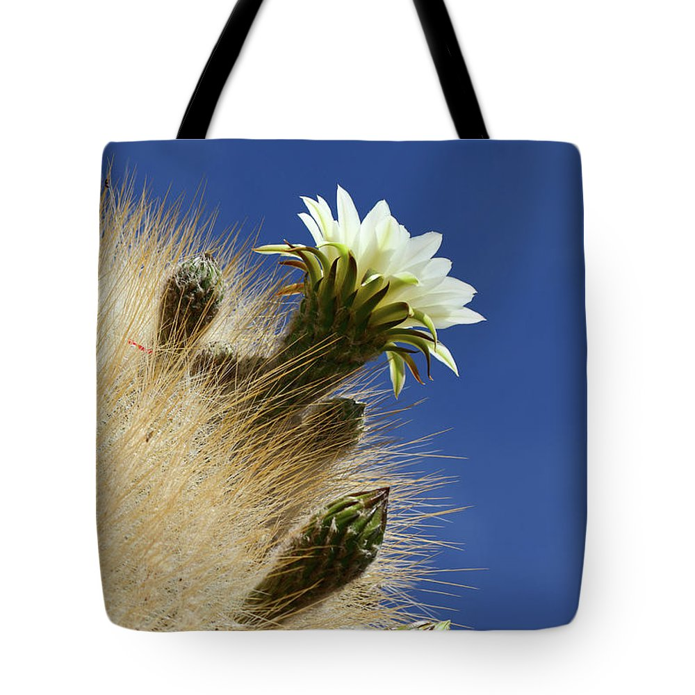 Flowering Cactus Tote Bag featuring the photograph Echinopsis Atacamensis Cactus In Flower by James Brunker