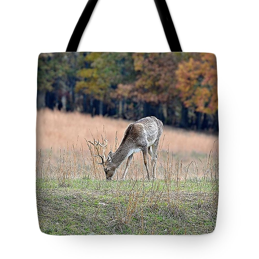 Animals Tote Bag featuring the photograph Edge Of The Forest by Jan Amiss Photography
