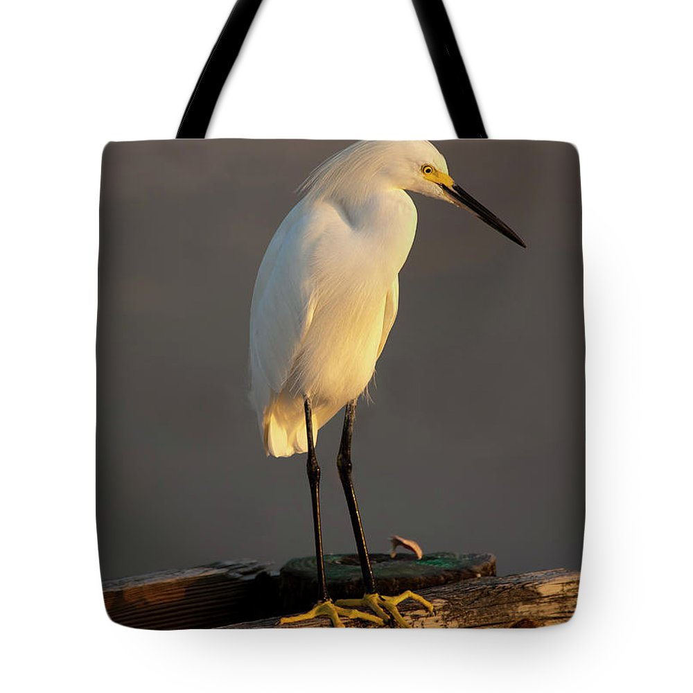 Egret Tote Bag featuring the photograph Egret Glow by Mike Dawson