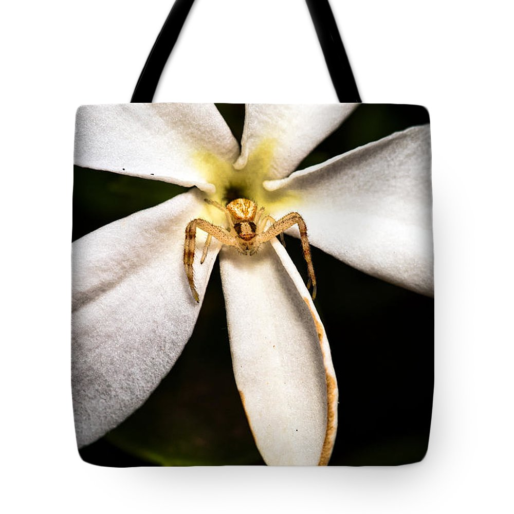 Spider Tote Bag featuring the photograph Eight Legged Goalie by Christopher Holmes