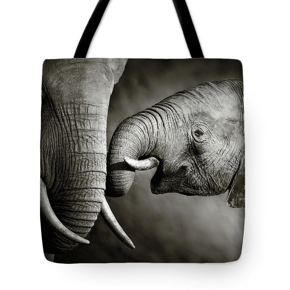Elephant; Interact; Touch; Gently; Trunk; Young; Large; Small; Big; Tusk; Together; Togetherness; Passionate; Affectionate; Behavior; Art; Artistic; Black; White; B&w; Monochrome; Image; African; Animal; Wildlife; Wild; Mammal; Animal; Two; Moody; Outdoor; Nature; Africa; Nobody; Photograph; Addo; National; Park; Loxodonta; Africana; Muddy; Caring; Passion; Affection; Show; Display; Reach Tote Bag featuring the photograph Elephant Affection by Johan Swanepoel