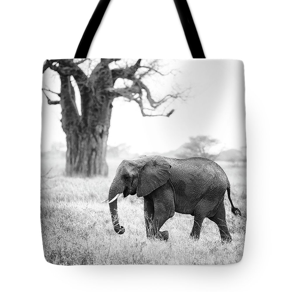 Baobab Tote Bag featuring the photograph Elephant And Baobab by Vicki Jauron
