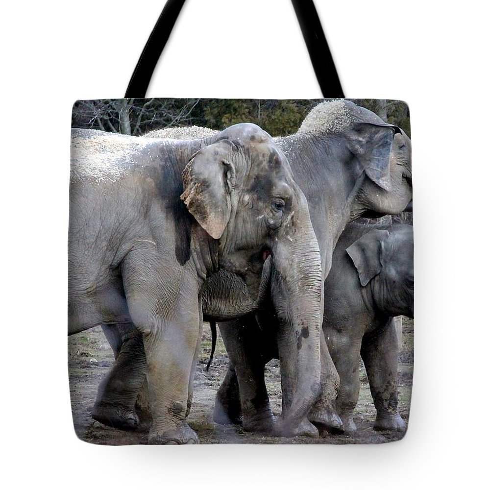 Asian Elephant Tote Bag featuring the photograph Elephant Family by Laurel Talabere