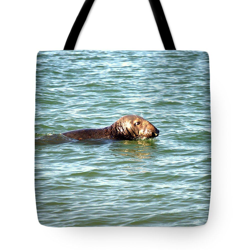 Elephant Seal Tote Bag featuring the photograph Elephant Seal by Chirag Patel