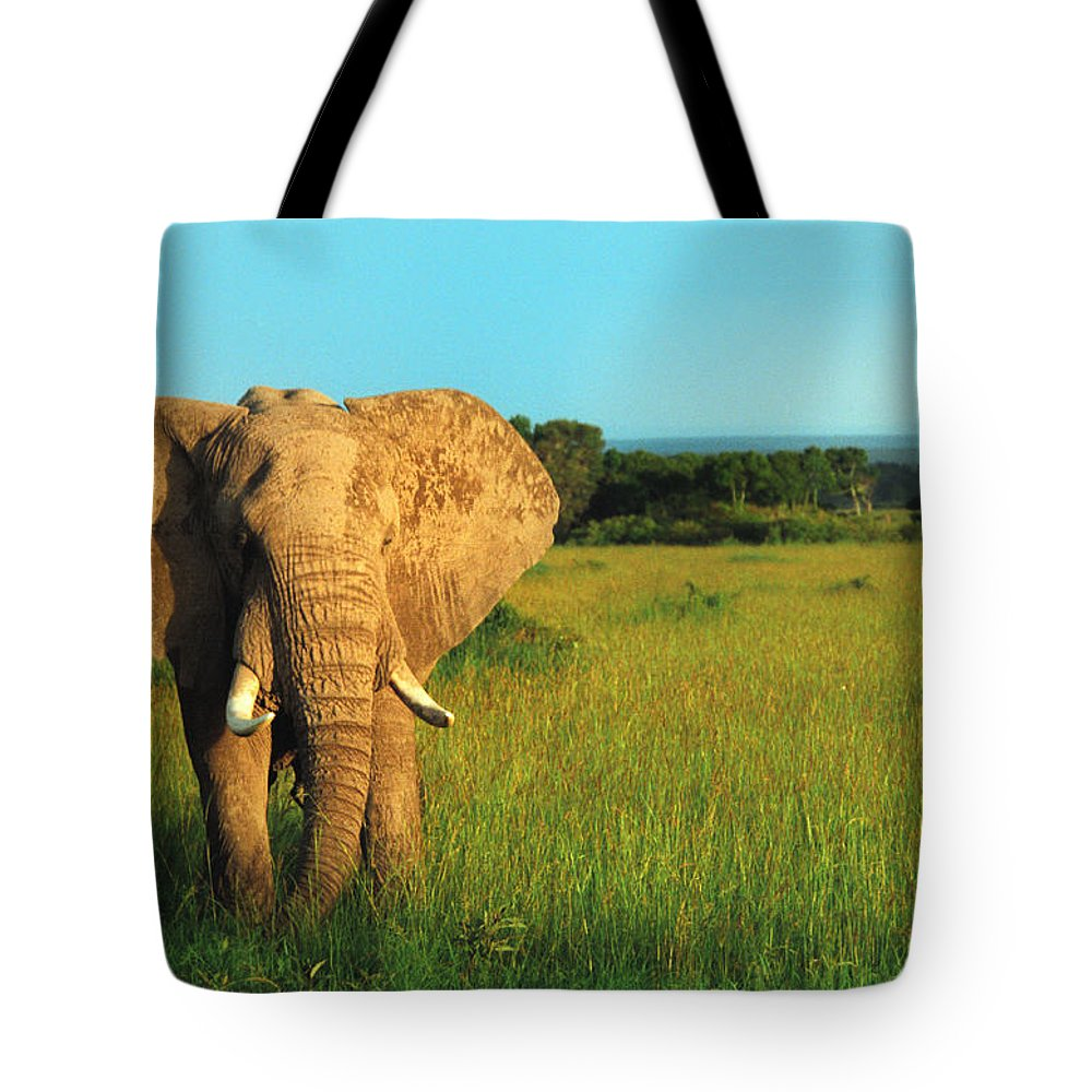 Africa Tote Bag featuring the photograph Elephant by Sebastian Musial