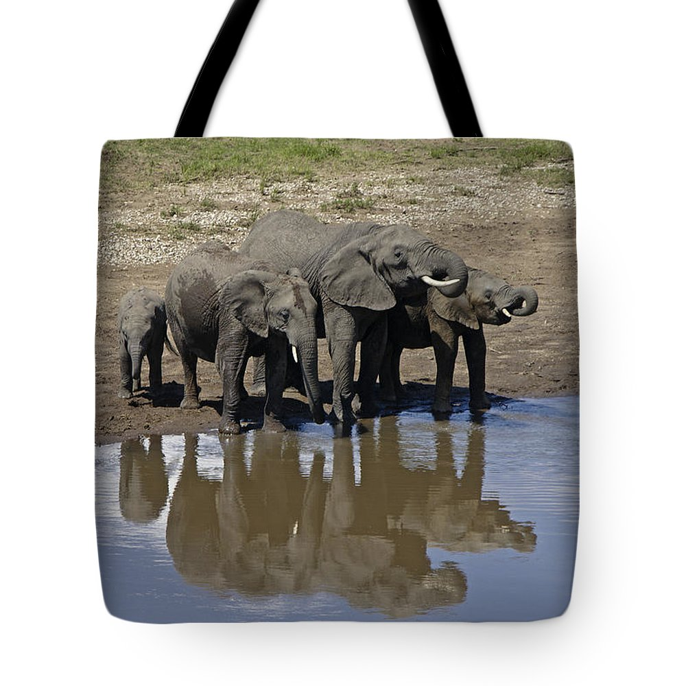 Africa Tote Bag featuring the photograph Elephants In The Mirror by Michele Burgess