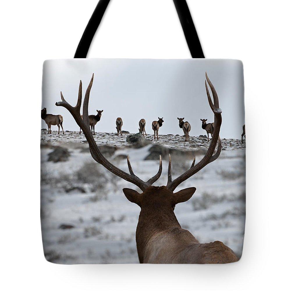 Elk Tote Bag featuring the photograph Elk Herd by Wildlife Fine Art