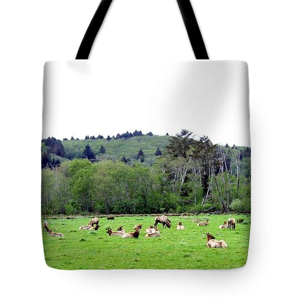 Elk Tote Bag featuring the photograph Elk Herd by Will Borden