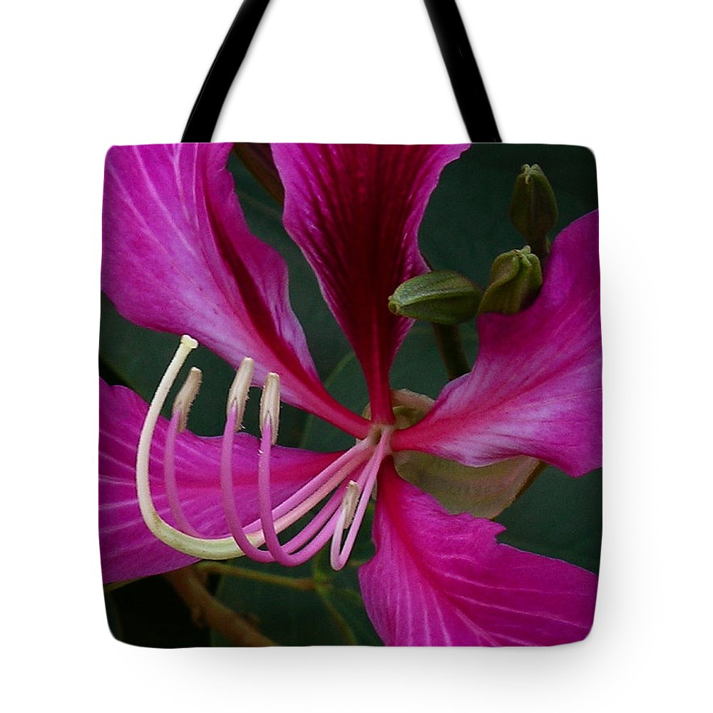Hong Kong Orchid Tree Tote Bag featuring the photograph Embrace by James Temple