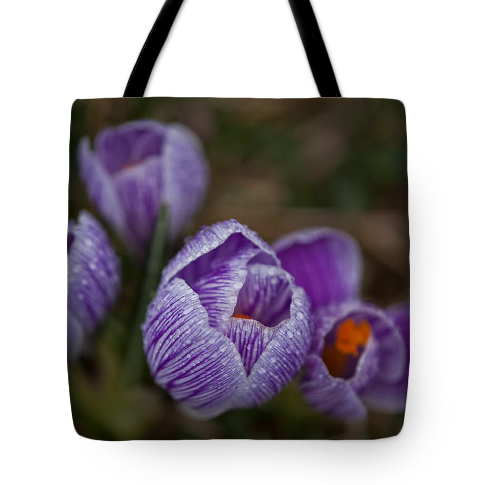 Domesticated Flowers Tote Bag featuring the photograph Emerging Crocuses by Irwin Barrett
