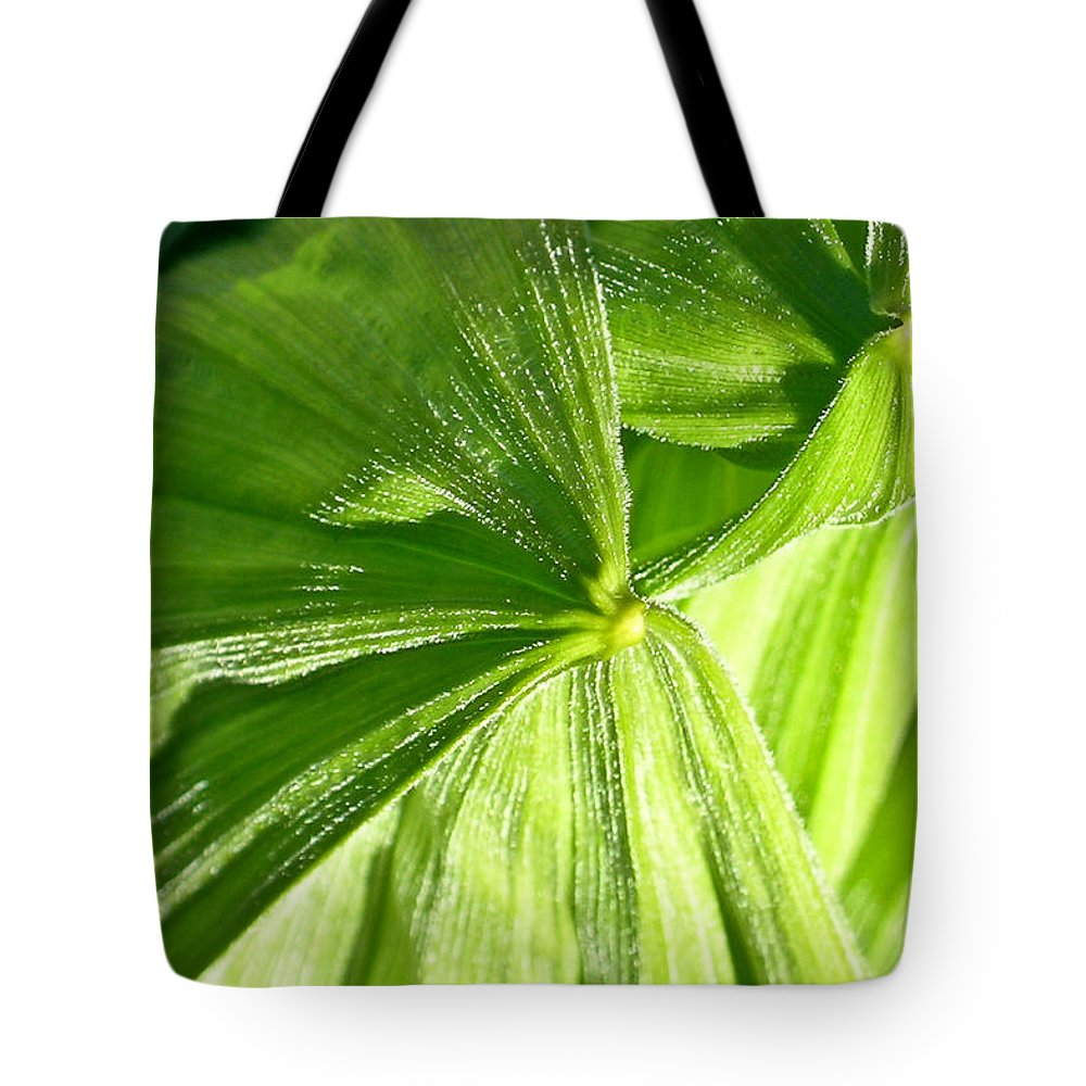 Plant Tote Bag featuring the photograph Emerging Plants by Douglas Barnett