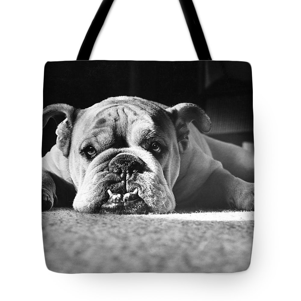 English Bulldog Photographs Tote Bags