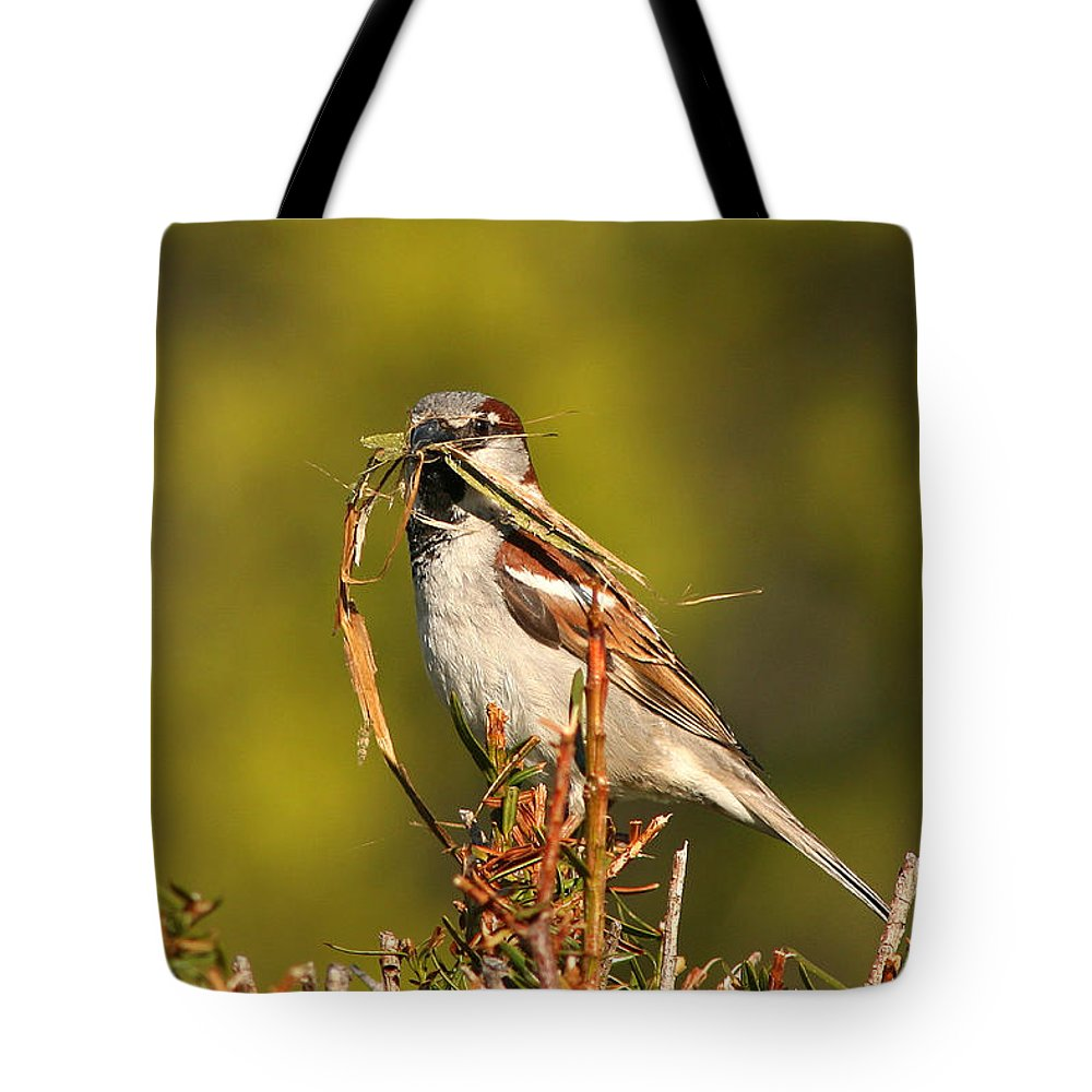 Sparrow Tote Bag featuring the photograph English Sparrow Bringing Material To Build Nest by Max Allen