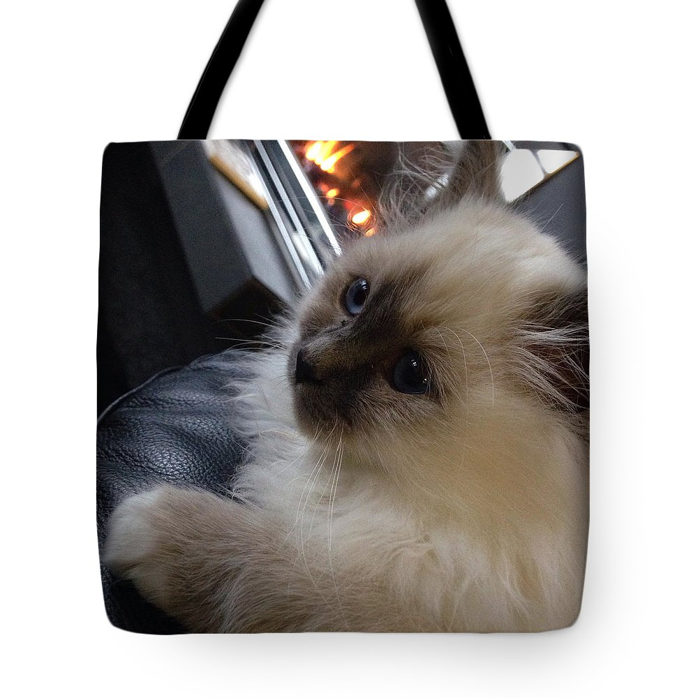 Iphone Tote Bag featuring the photograph Ernie The Birman Kitty by Shivonne Ross
