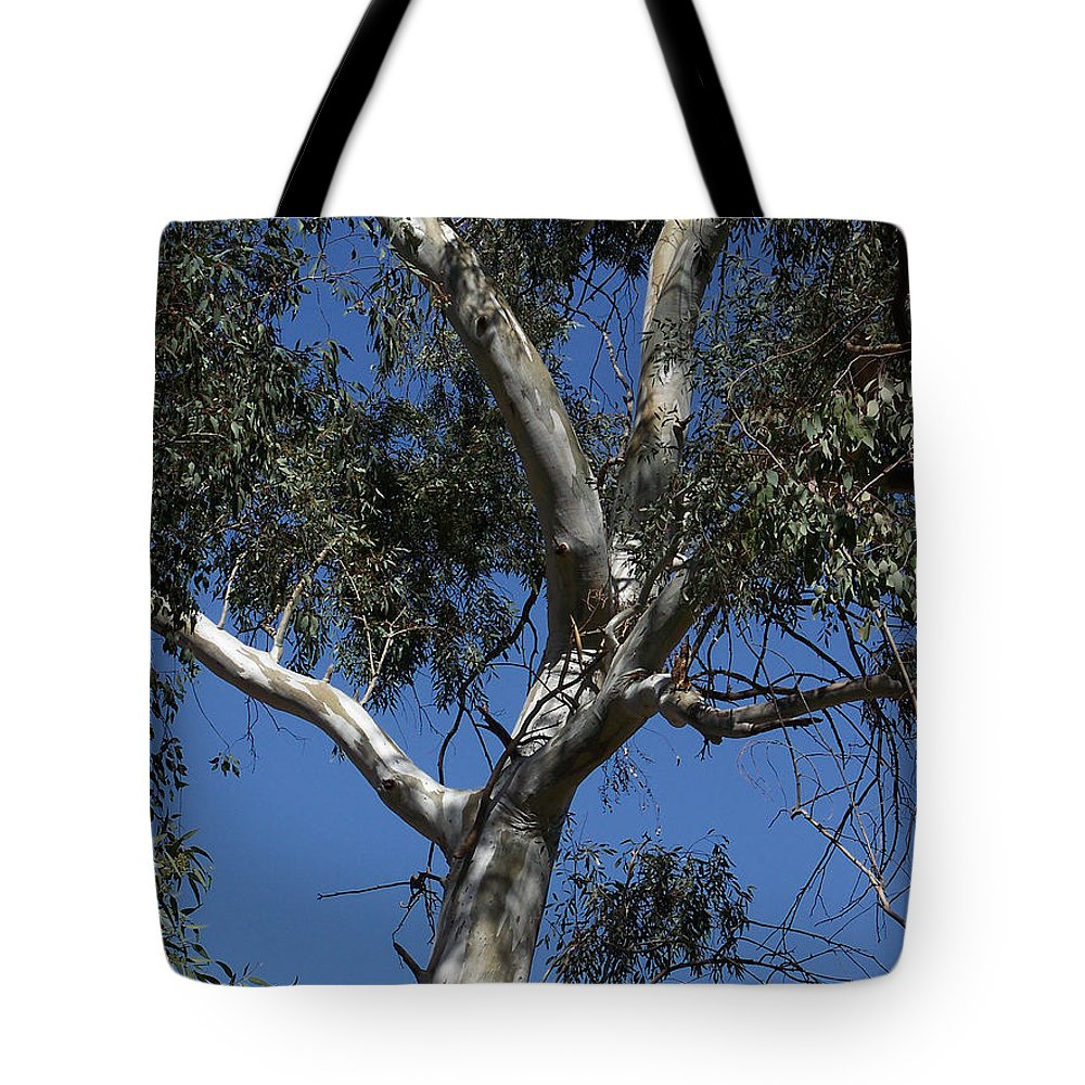 Trees Tote Bag featuring the photograph Eucalyptus by Kathy McClure