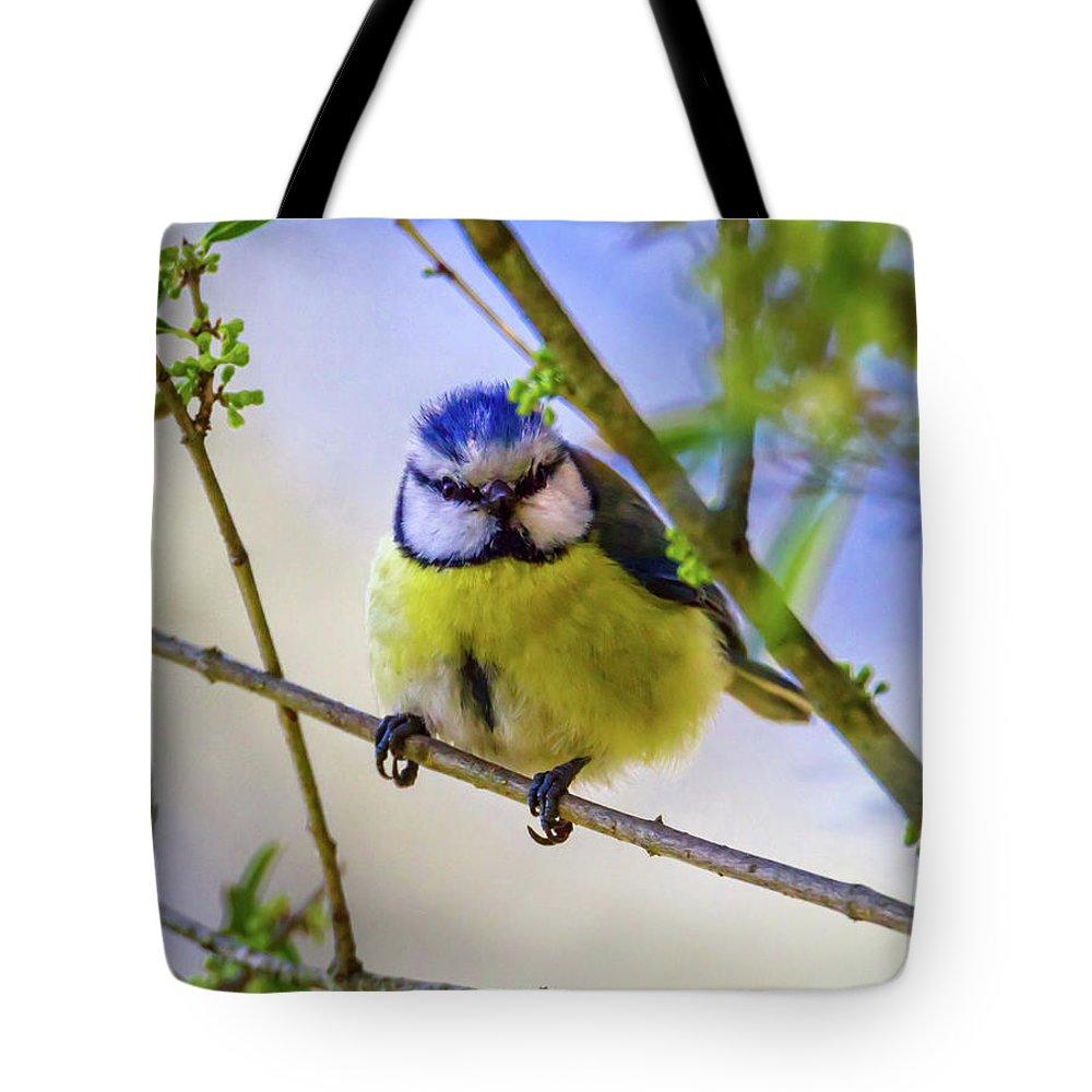 Blue Tote Bag featuring the photograph Eurasian Blue Tit, Cyanistes Caeruleus by Elenarts - Elena Duvernay photo