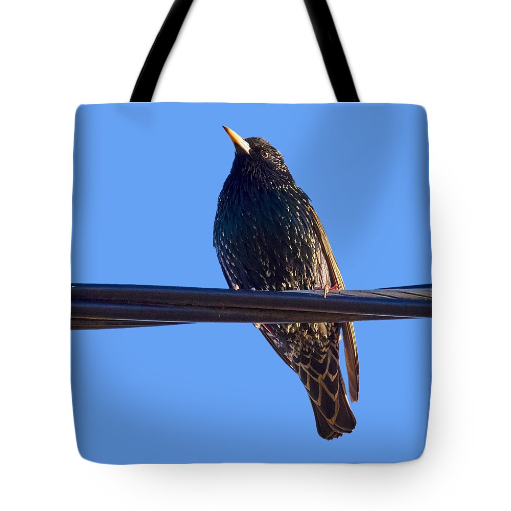 Lehtokukka; Lehtokukka Photography; Jouko Lehto; Lintu; Bird; Kevät; Spring; Muutto; Migration; Kottarainen; Sturnus Vulgaris; European Starling; Starling Tote Bag featuring the photograph European Starling Trasparent Background by Jouko Lehto
