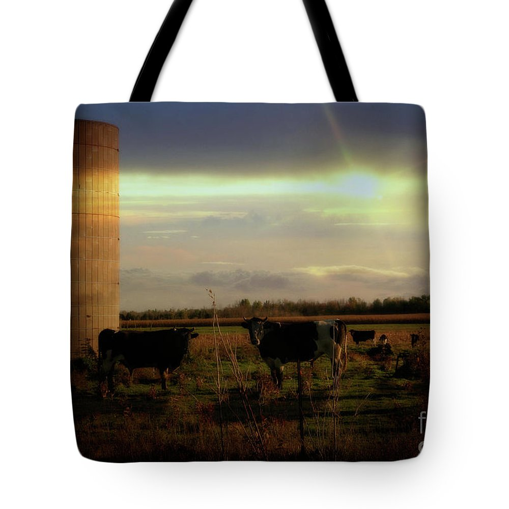 Cows Tote Bag featuring the photograph Evening Cows by Joel Witmeyer