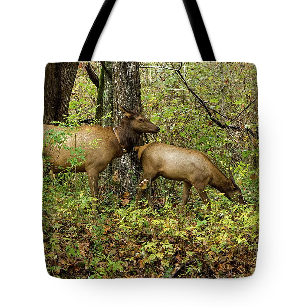 Cherokee Nc Tote Bag featuring the photograph Evening Forage by Jo Ann Gregg