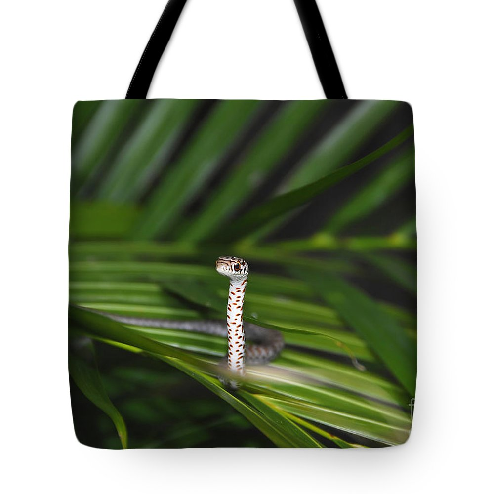 Everglades Racer Tote Bag featuring the photograph Everglades Racer by David Lee Thompson