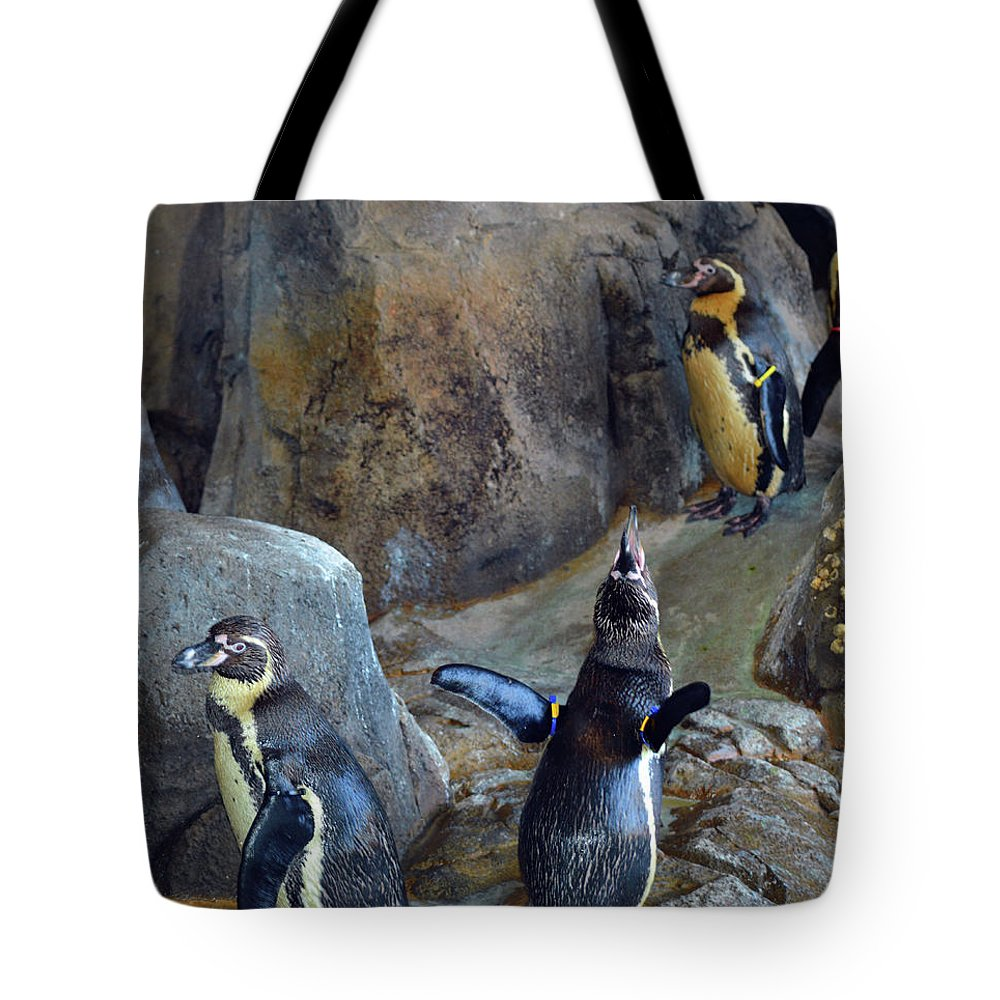 Penguins Tote Bag featuring the photograph Everybody Sing by Linda Benoit