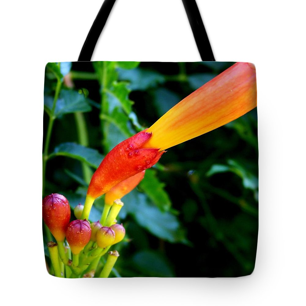 Flower Tote Bag featuring the photograph Evolution Of The Trumpet Flower I by Jai Johnson