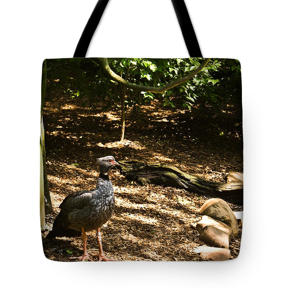 Aves Tote Bag featuring the photograph Exotic Bird 1 by Douglas Barnett