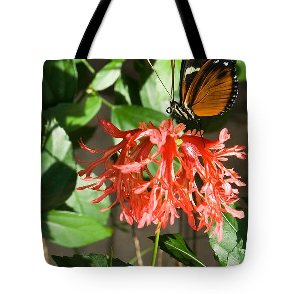 Butterfly Tote Bag featuring the photograph Exotic Butterfly On Flower by Douglas Barnett