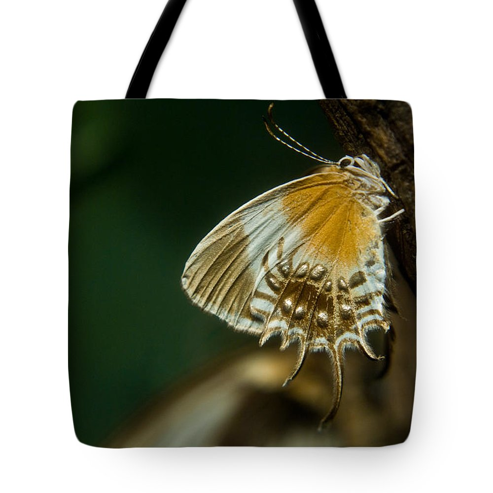 Butterfly Tote Bag featuring the photograph Exotic Butterfly On Tree Bark by Douglas Barnett