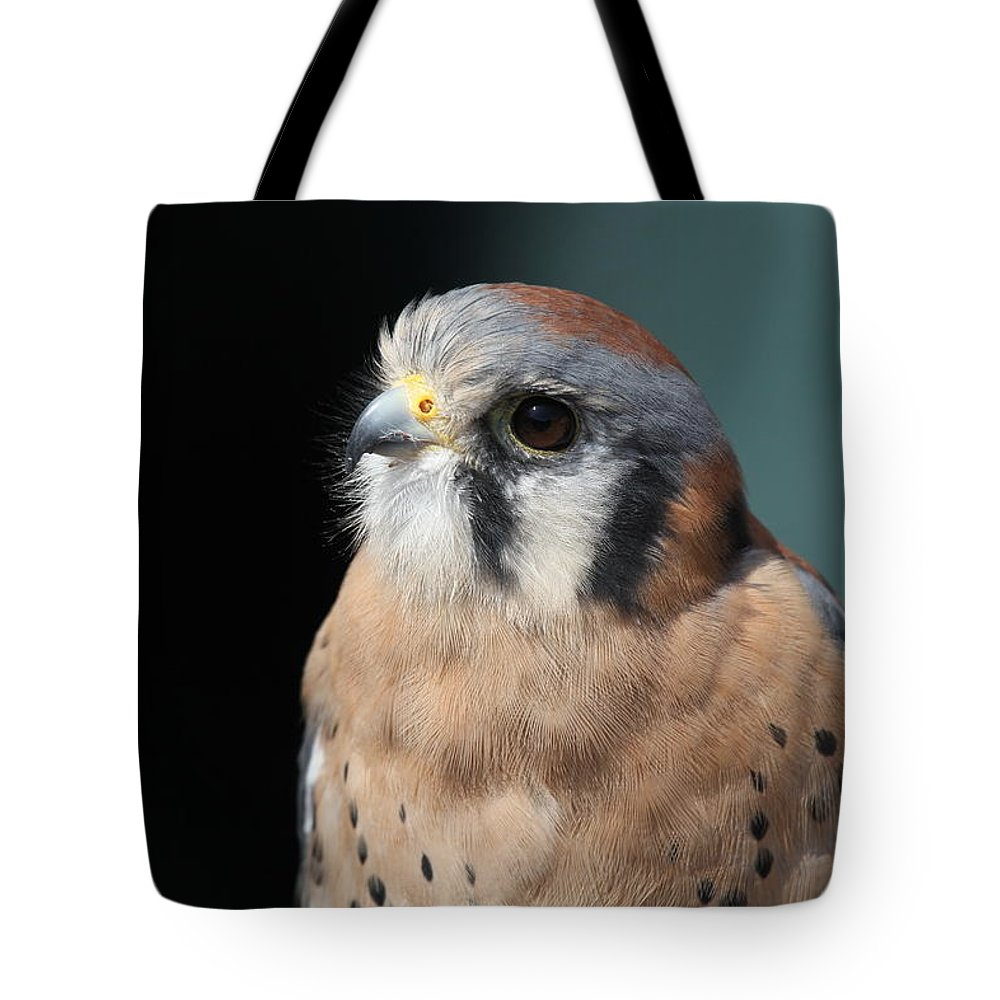 Falcon Tote Bag featuring the photograph Eye Of Focus by Laddie Halupa