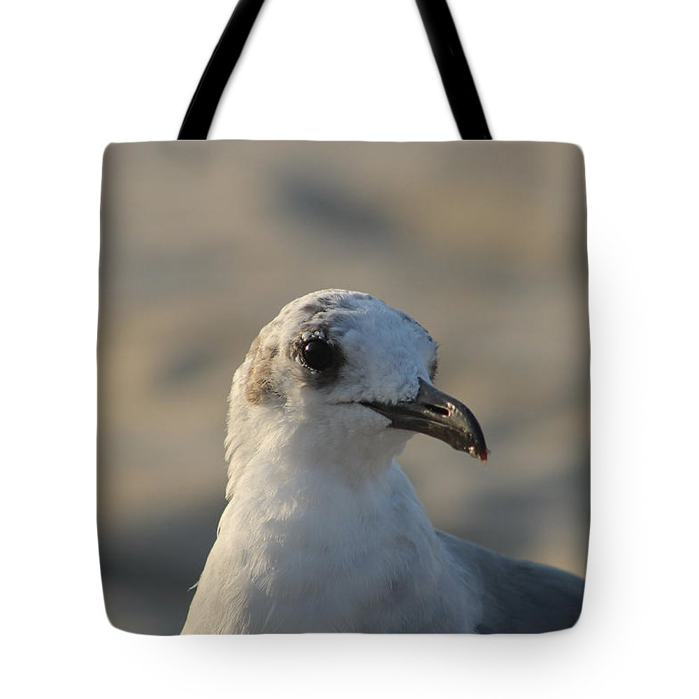 Animals Tote Bag featuring the photograph Eye Of The Gull by Robert Banach
