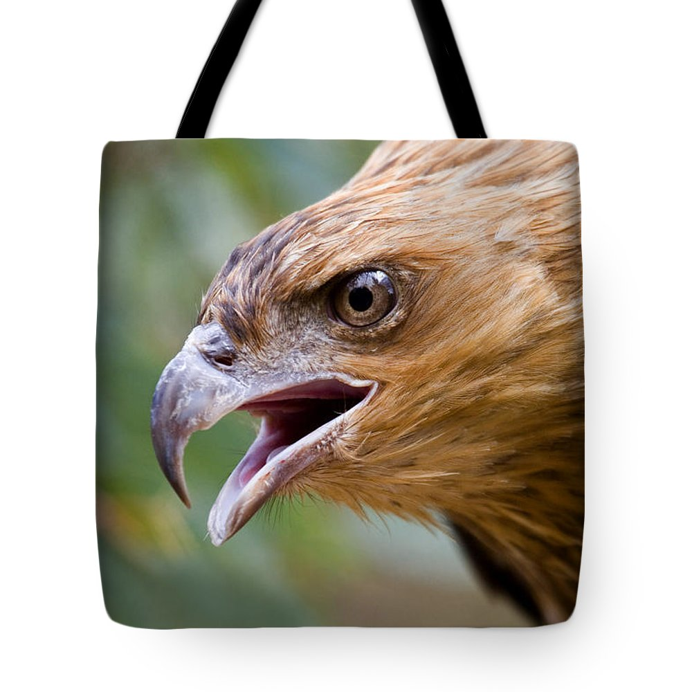 Hawk Tote Bag featuring the photograph Eyes Of The Hunter by Mike Dawson