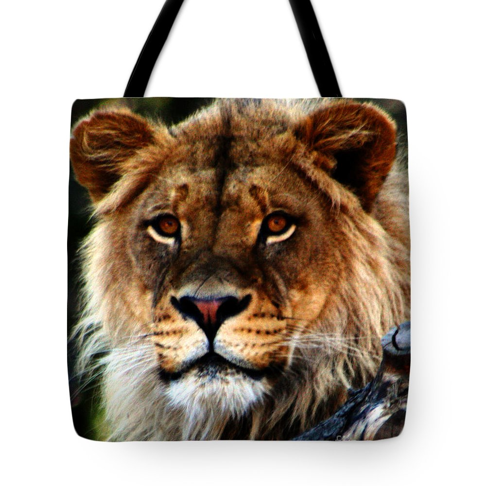 Lion Tote Bag featuring the photograph Eyes Of The Young King by Nick Gustafson