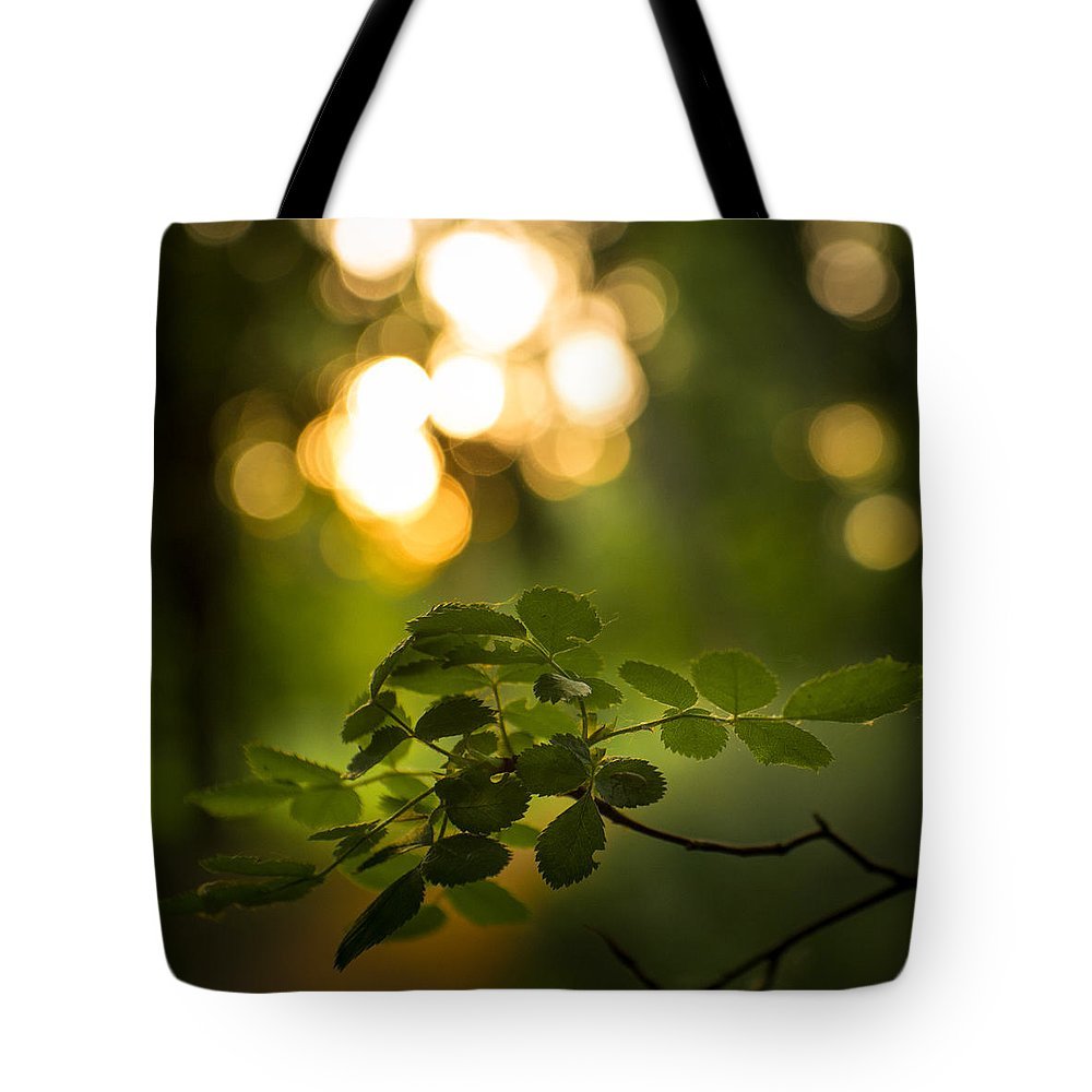 Bokeh Tote Bag featuring the photograph Fairyland Trees by Peter Mojzes